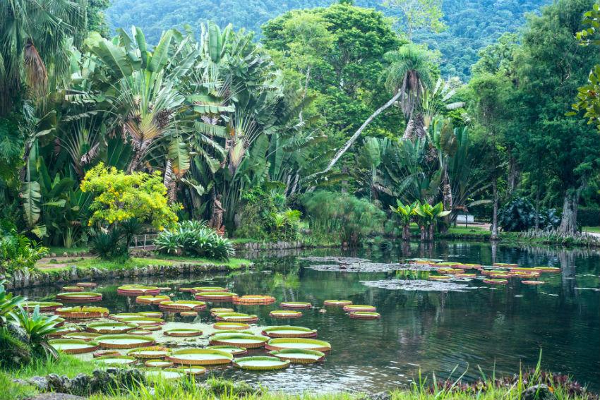 amazonia - Viagem de julho: dicas de lugares para curtir as férias
