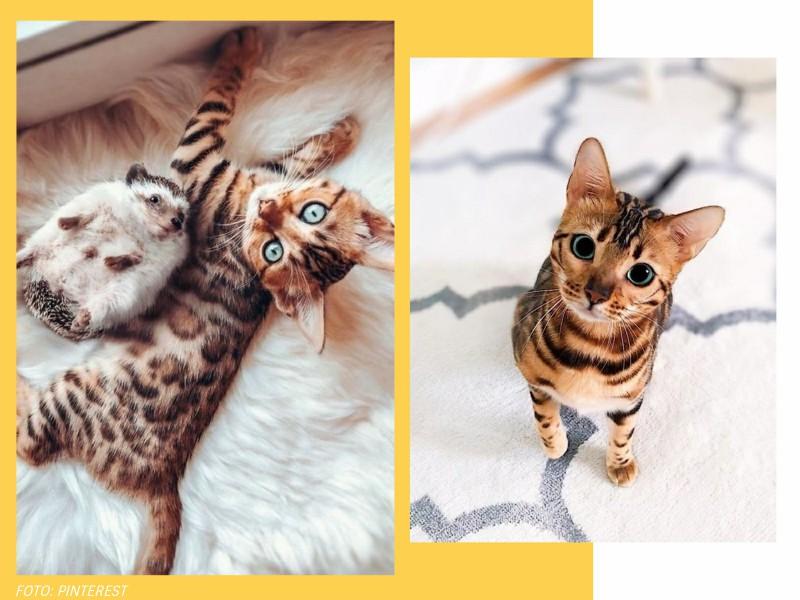 comoadotarumanimalcomconsciencia5 1 - Pet lover: como adotar um animal com consciência?